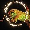 Цирки в Суворове