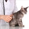 Ветеринарные клиники в Суворове